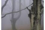 artikutza roble otoño